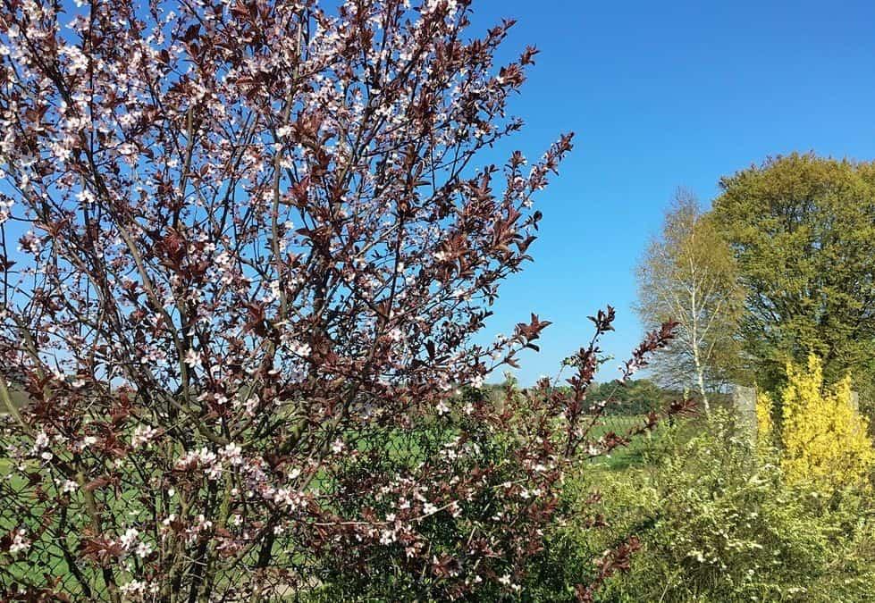 Den Frühling spüren