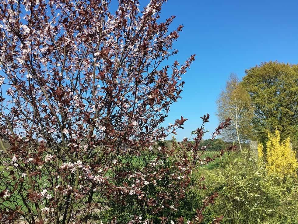Frühling spüren